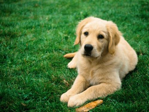 community-dog